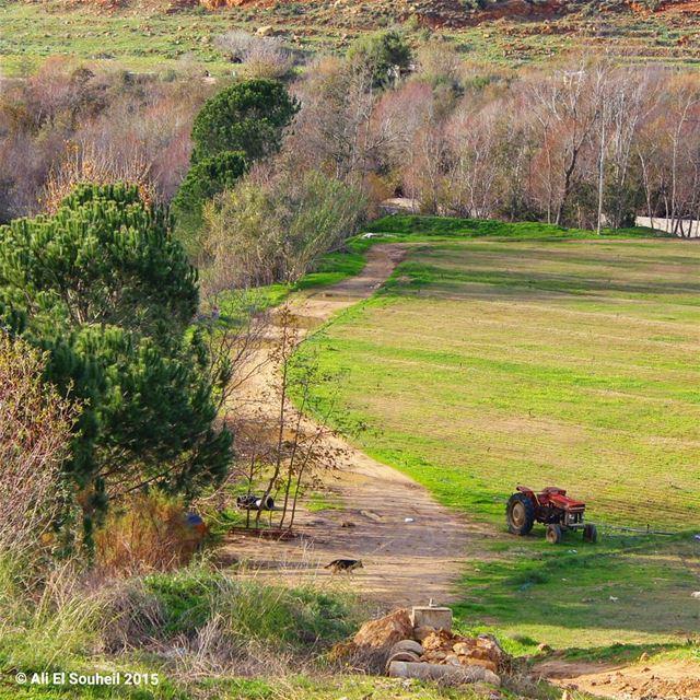 tb besri valley tractor trees green winter lebanese lebanon ... (Besri, Chouf)