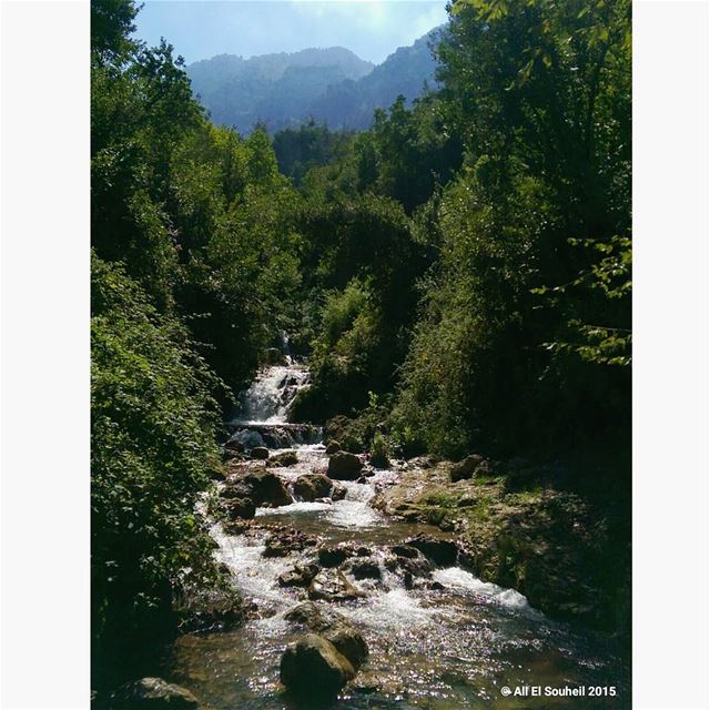 today akkar amazing hiking valley river mountains forest green ... (وادي جهنم)