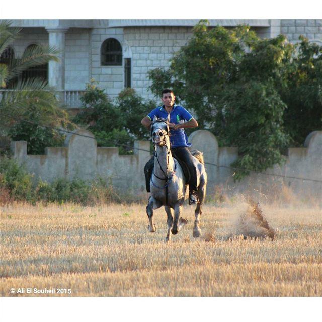 horse horsing friend south_lebanon southlebanon lebanon colorful ... (Kherbet Al Dwair)