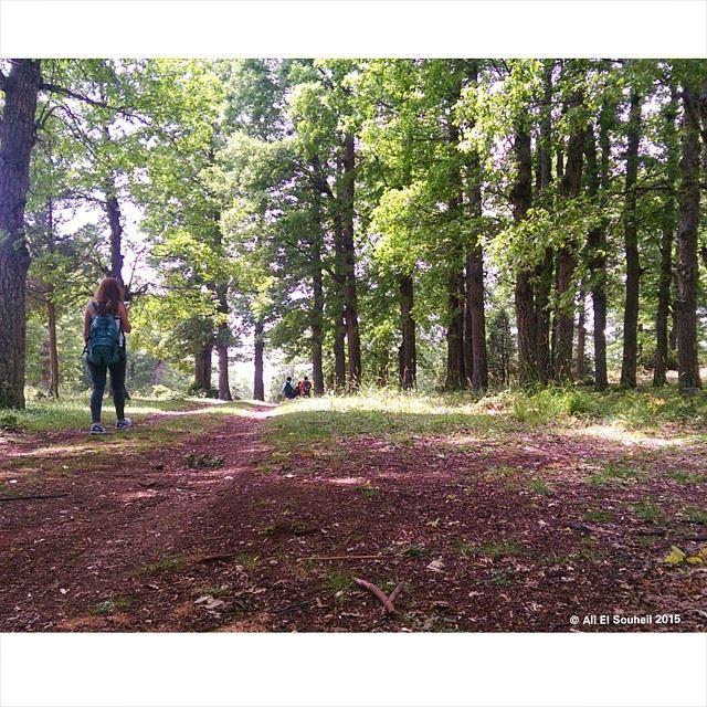 qamou3a ammoy3a akkar hiking forest lebanon colorful ... (Ammou3a)