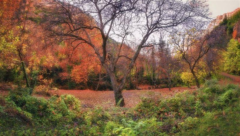 landscape nature naturelovers panorama colorful instaphoto nude tree...