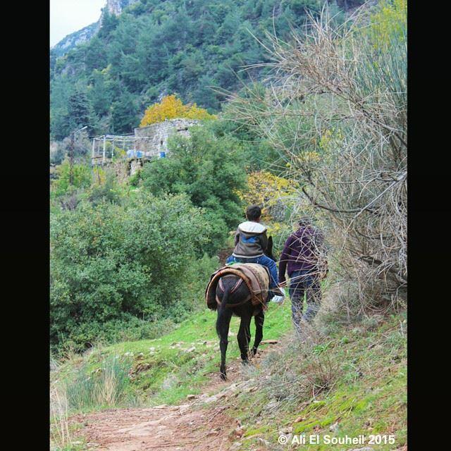 qannoubine valley nature green kids ride donkey lebanon colorful ...