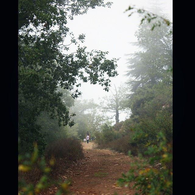 ehden forest hiking lebanon colorful instagramhub instalove ...