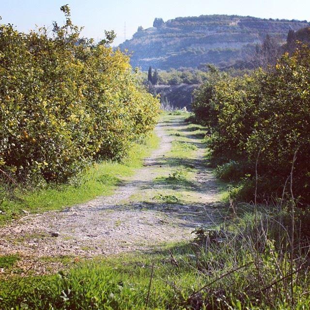 Good morning nature spring road trees mountain southlebanon lebanon...