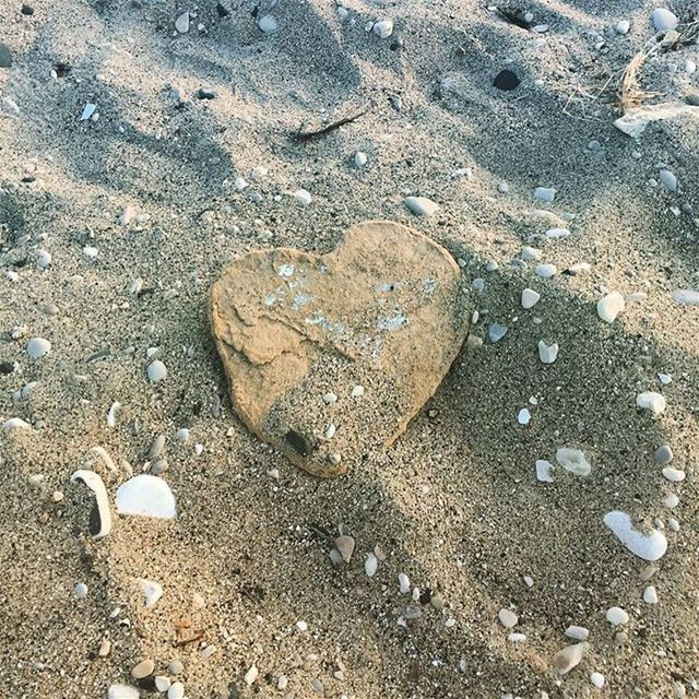 ❤ spotted on the Okaibeh's trashed beach which gets our rescuing in March � (Naher Ibrahim)