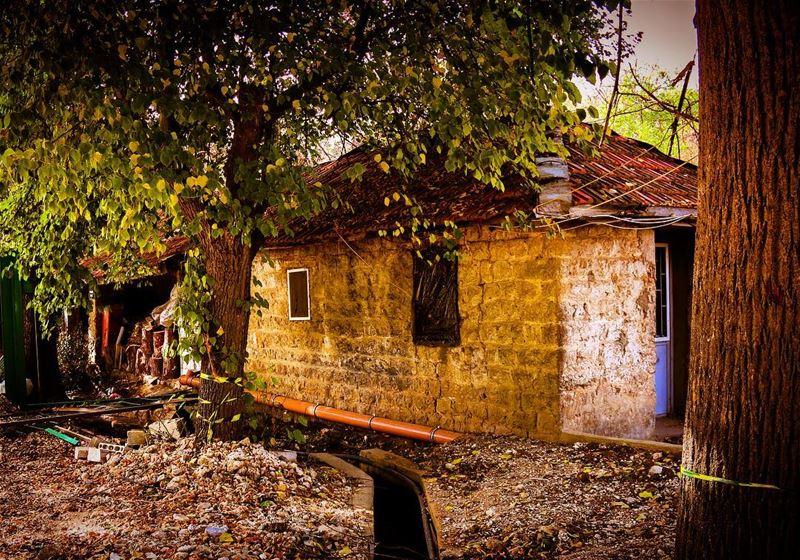 Farmhouse 🏡🏡 بيت المزرعة... (مزارع تعنايل)