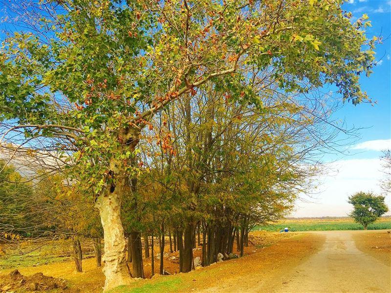 أجمل الاشياء تلك التي تأتي من دون أن نتوقعها ، حين نكون قد تراجعنا عن سعينا (`Ammiq, Béqaa, Lebanon)