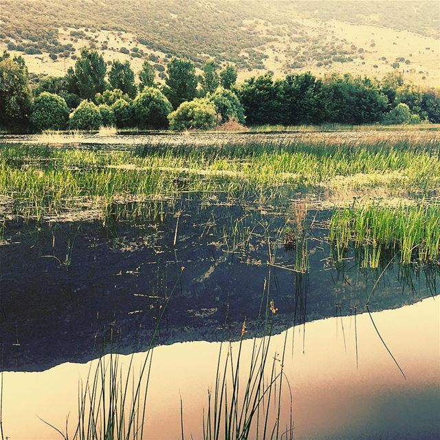 what we see in this world is a mirror reflection of our own thoughts 🐢🐛... (West Bekaa)