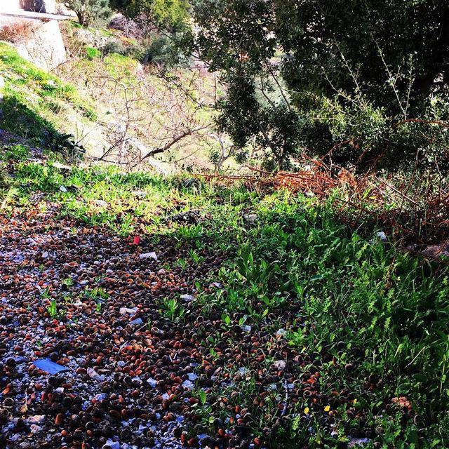 Mozaic springpreparation naturebeauty naturalart beautifulcolors... (Ein Zebde)