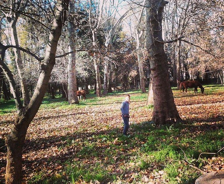 autumn winter cold forest amazing place horse sun shadow boy son grass... (Taanayel Lake)