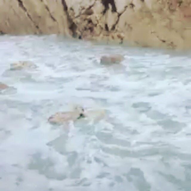 انفه الكورة أثناء العاصفة يوهان anfehalkoura anfeh lebanon ...