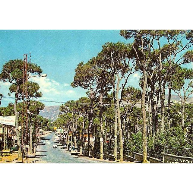 Bois DeBoulogne 1967 , (Bois DeBoulogne, MontLiban, Lebanon) ~ Bois De Boulogne Lebanon