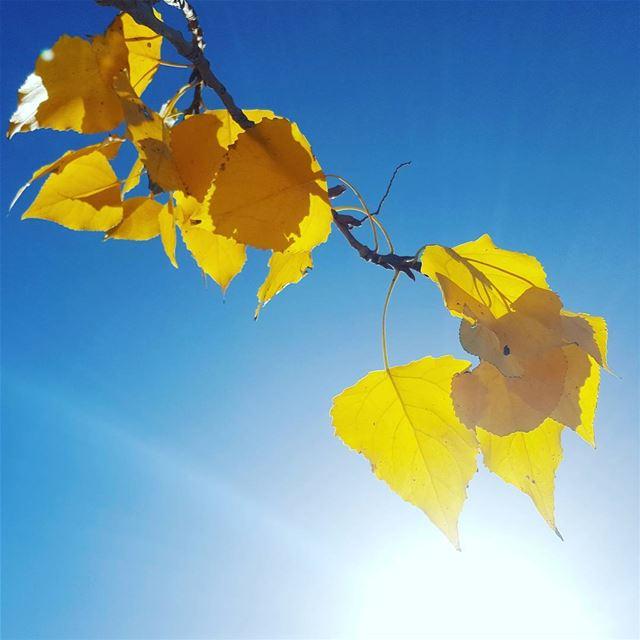 Looks like Fall 🍂 (Faraya, Mont-Liban, Lebanon)