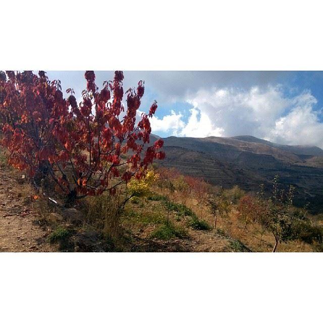 ig_lebanon lebanon_hdr proudlylebanese insta_lebanon livelovebeirut ...