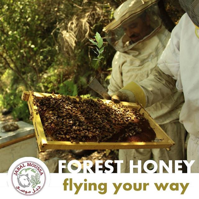 You can now order our all natural  honey online!  JabalMoussa http://jabal (Jabal Moussa)