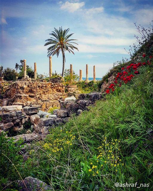 لا تسألوني ما اسمُهُ حبيبيأخشى عليكم ضَوْعَةَ الطُيُوبِ...والله لو بُحْتُ (Roman ruins in Tyre)