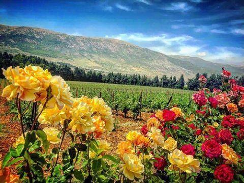 Lebanon - لبنان beirutcitypage ...