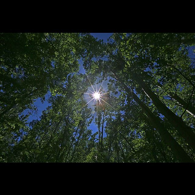 The sun shining in the sky over a forest in the eastern village of...
