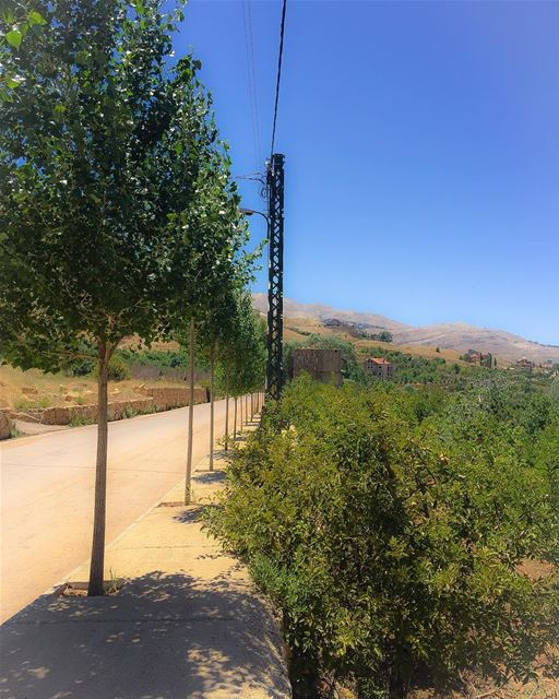 Poplar trees guarding appletrees road mountain mountainroad bluesky ...