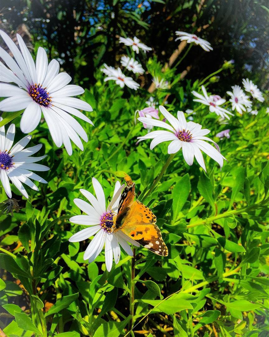 A good morning (night?) to you all! flowers flowerpower butterfly ...