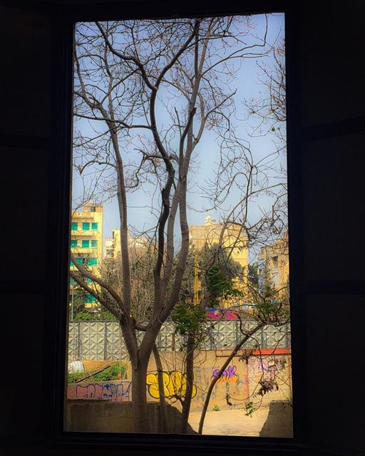 Window on a backyard and graffiti tag cityview tree_captures ... (Mar Mikhael, Beirut)