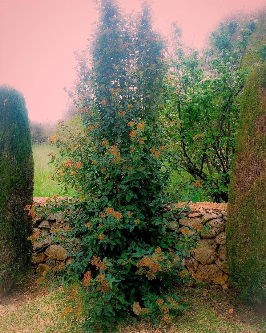 Dream in green landscape tree_captures tree_brilliance ...