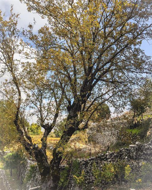 The essence lebanese_nature allnatureshots naturephotography ...