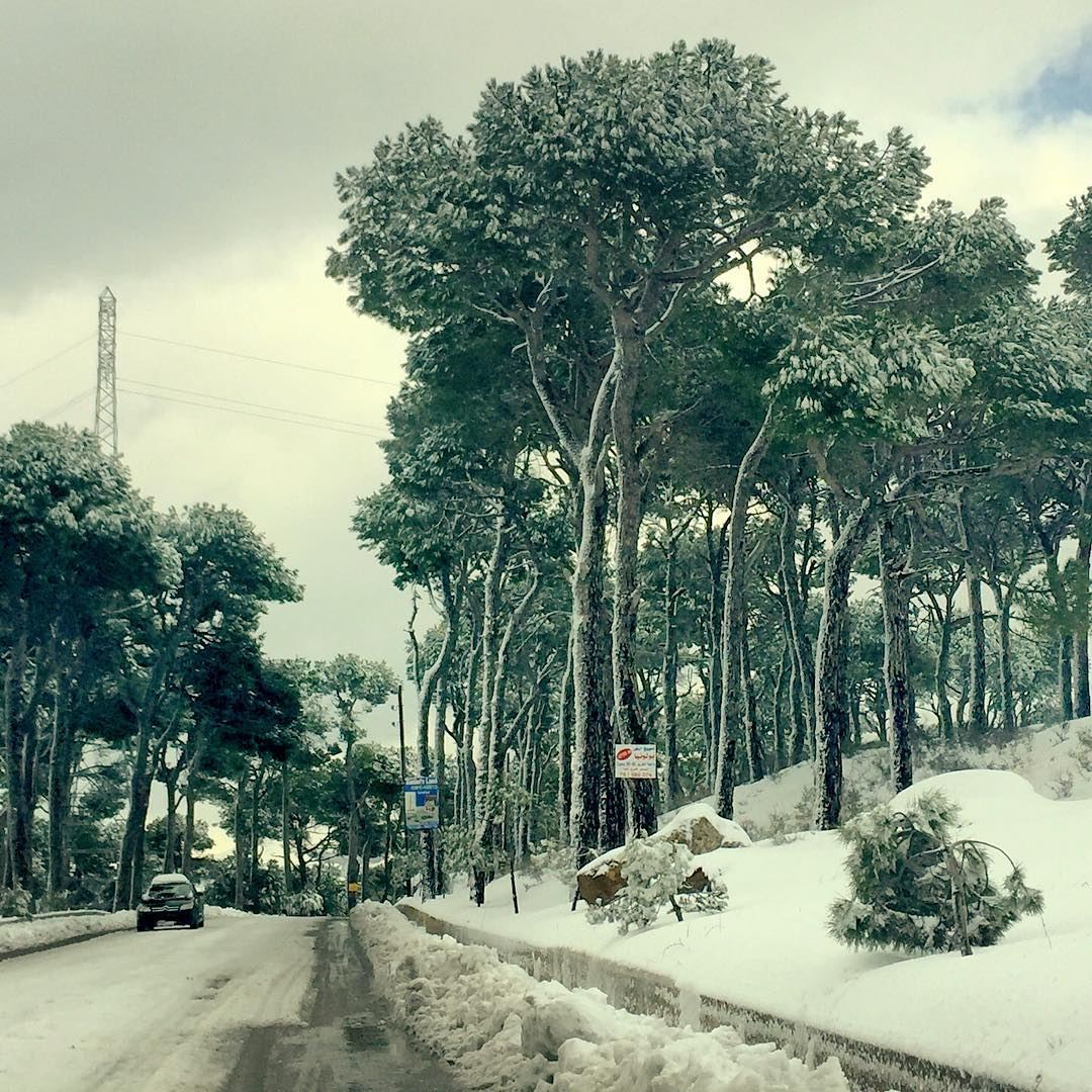 On the road  mountain  road  snow  trees  tree_captures  tree_magic  grey ...