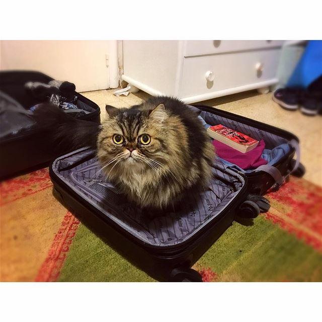 🎵🎶 Dans ma valise, il y a... 🐱 lebanon beirut kitty cat catlover ... (Achrafieh, Lebanon)