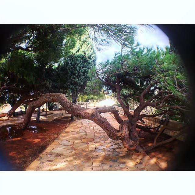 🌲🇱🇧 lebanon from beirut to chekka north amazing iloveit ... (Chekka Jdîdé, Liban-Nord, Lebanon)
