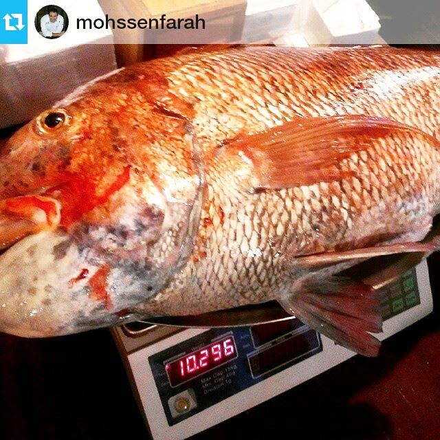 Catch of the day fresh fish redsnapper fishing fish seafood...