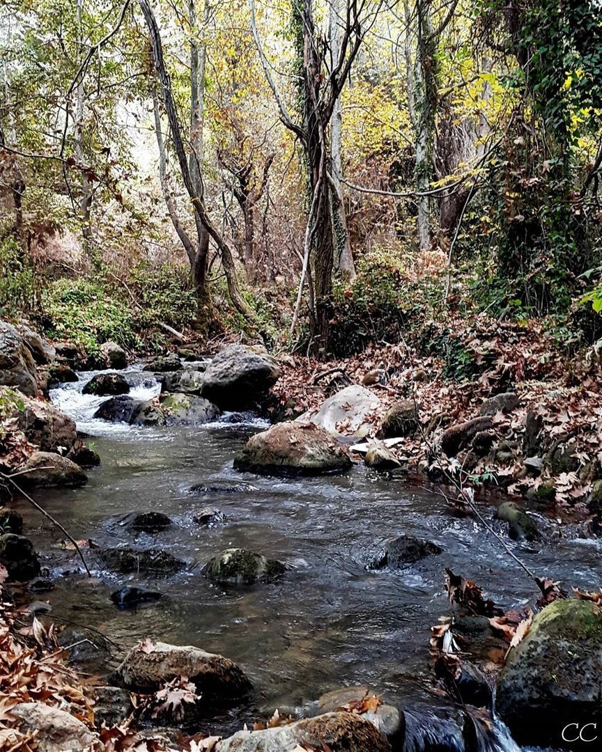 lebanon wadi qannoubine nature trees water river livelovelebanon ...