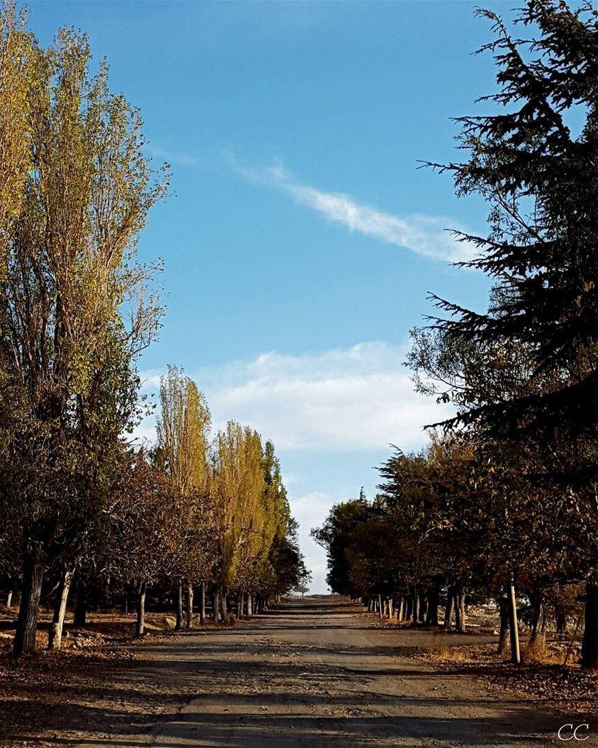 autumn season trees colors lebanon mountain qanatbakish sky ...