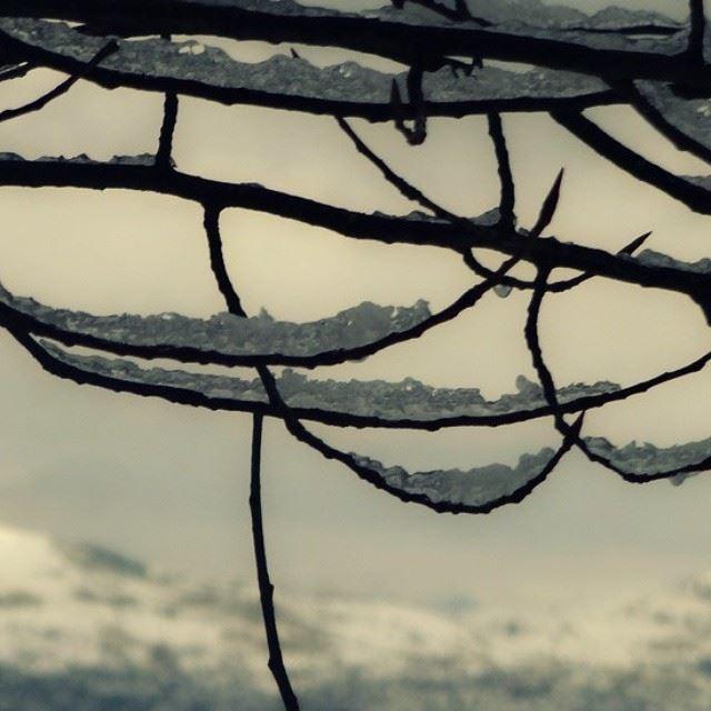 winter season snow trees branches lebanon livelovelebanon ...