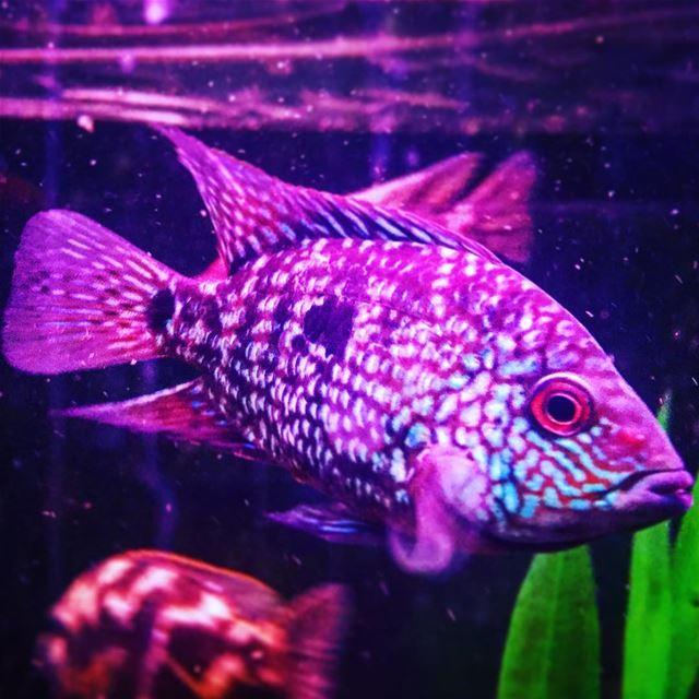instame instamood animal world fish aquarium water blue purple lebanon...