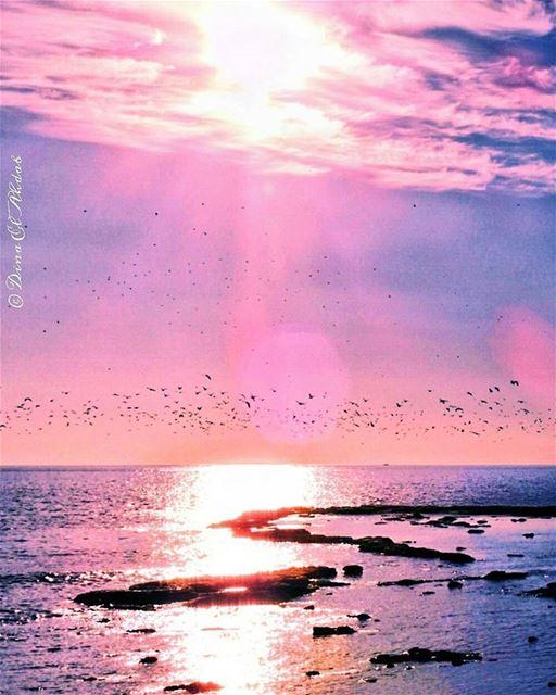 La Méditerranée a une couleur comme les maquereaux, c'est-à-dire... (Al Mina', Liban-Nord, Lebanon)