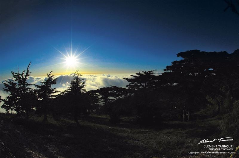 """""""Le génie, comme le cèdre du Liban, pousse sur les cimes, il grandit et se... (Maasser El Chouf)"""