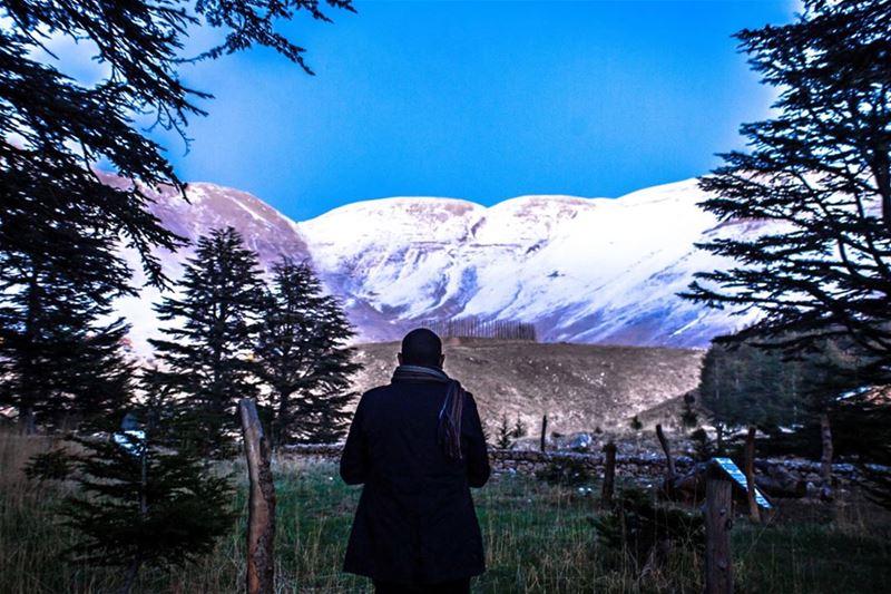 sunset mountains Summit Rocks Snow Above cold cedars Tree Green Nature... (Arz Tannourine)