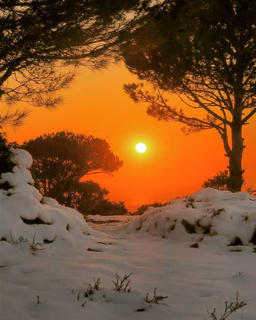 Cold Heat 🔥❄🌋. sunset pine trees snow landscape nature outdoors ...
