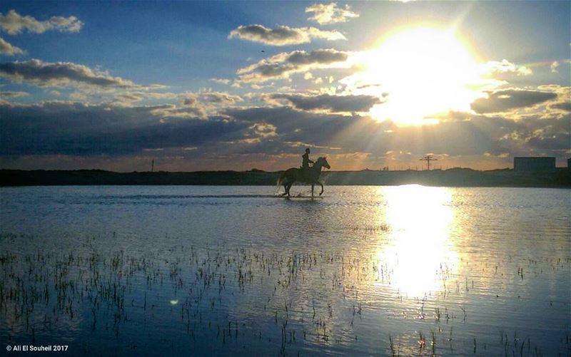 ما كل من يركب على الخيل خيال ولا كلّ خيل تعجبك هي أصيله today sunset ... (Tyre Beach)