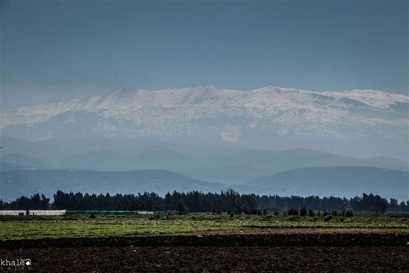 صباح الخير من سهل_عكار ❤ ومدرجات الجبال التي تحمي ظهره❤ عكار Akkar■¤¤¤