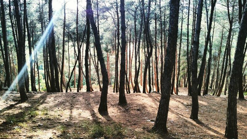 Enchanted elmashroo3 forest tibnine lebanon instagramers ... (Tibnin)
