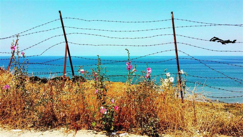 Paradise Lost barbedwire paradise savelebanon instagramers ... (Beirut, Lebanon)