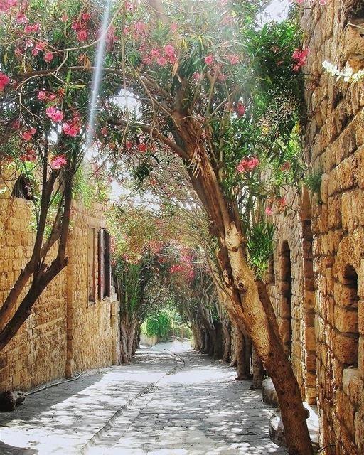 Domingo de paz e tranquilidade em uma agradável rua arborizada de Byblos 🇱 (Byblos, Lebanon)