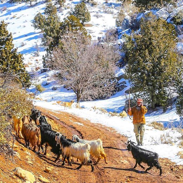 The shepherd life... (Jerd El Akoura)