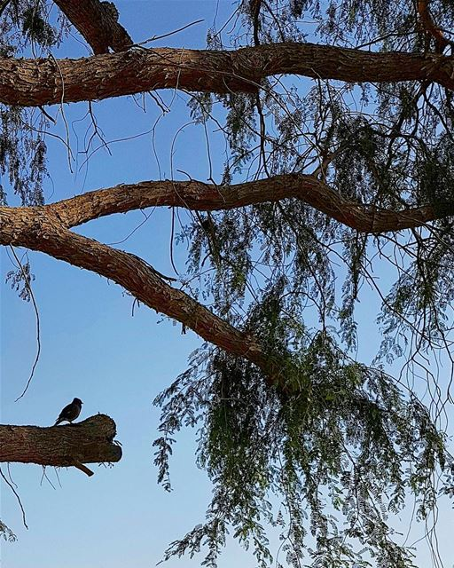 ... I'm all alone upon this tree;Waiting for you to come join me 😊😎---- (Dubai, United Arab Emirates)