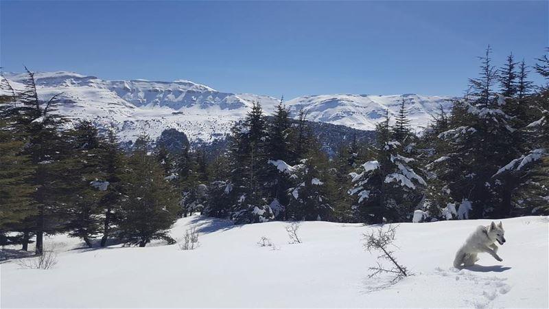 Simply breathtaking amazingview viewfromthetop mylebanon northlebanon...