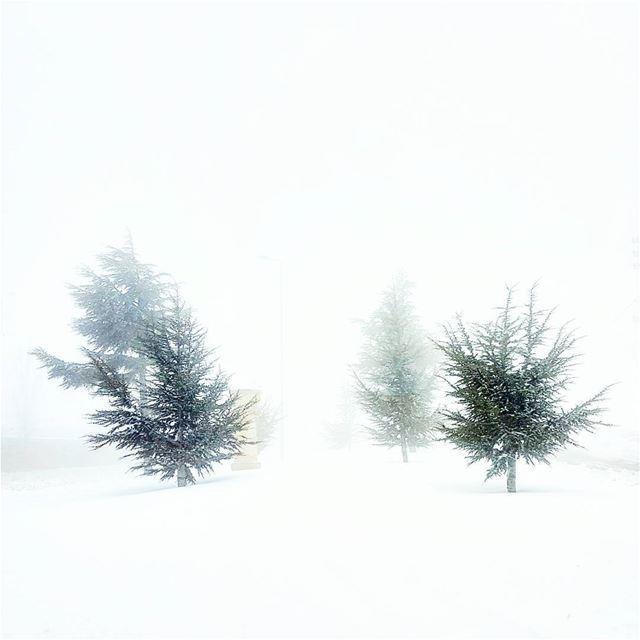 Phantoms flurry frozen lebanese winter landscape lebanon ... (Kfardebian)