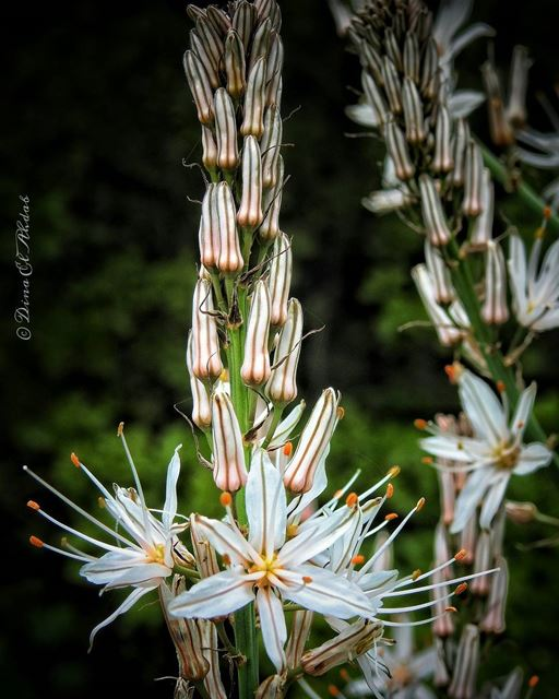 🌼_____ naturephotography nature_perfection naturelovers natureart ... (La Reserve Horsh Ehden)
