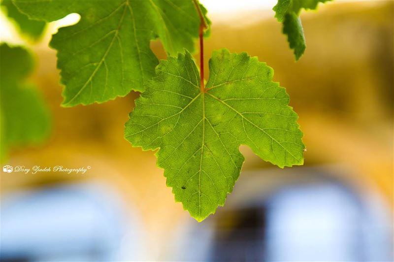 Feeling Fall colors 😊😊!! whatsapplebanon sky colors green yellow ...